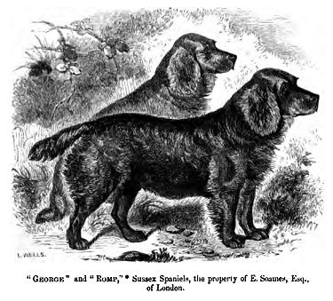 Sussex Spaniels 1859
