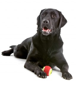 help-my-dog-wont-retrieve