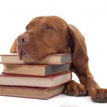 Gundog training: How to read your dog