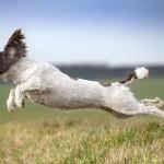 What is force free gundog training?