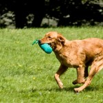 Retriever training: prepare your gundog with transition blinds