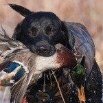 What is a Positive Gundog?
