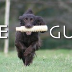 The Positive Gundogs Group