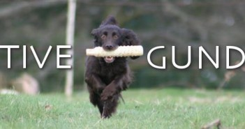 positive gundogs